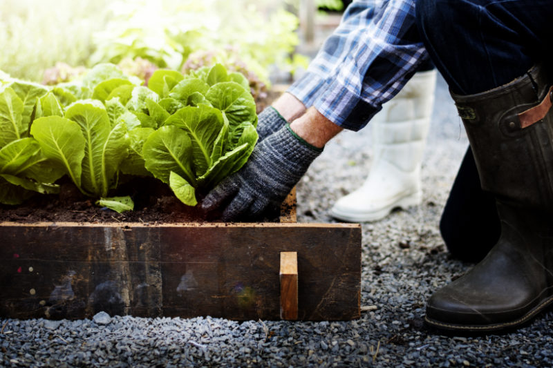 Fall Gardening Tips That Ll Keep Your Flowers And Produce Healthy