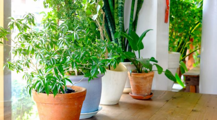 How to Properly Prune Your Plants