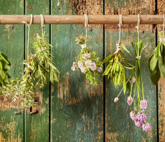 How to Update Your Herbal Apothecary for Fall Allergies