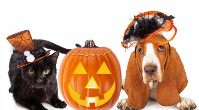Keep Your Furry Family Comfortable Through Fall and Winter