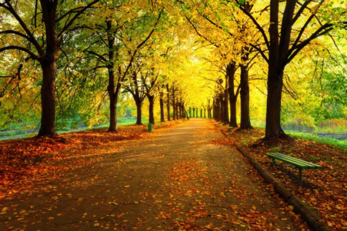 Travel to These Places to View the Best Fall Foliage