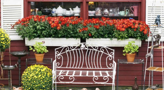 Welcome Fall and Your Guests With Gorgeous Window Boxes