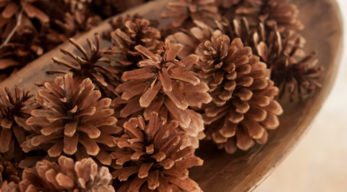 bowl of cinnamon-scented pine cones