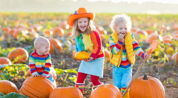 Jack O' Lanterns and Top Pumpkin Patches in the Nation